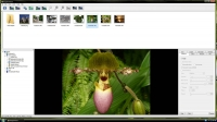 WinX YouTube Downloader 5.3