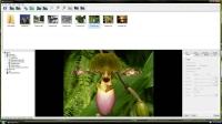 WinX YouTube Downloader 5.5