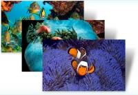 Pești tropicali - Tema Windows 7