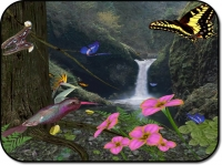 Butterflies3D ScreenSaver